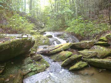 Nearby Creek